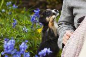 Hundehalterhaftpflicht