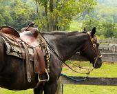 Pferdehalterhaftpflicht