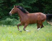 Pferdehaftpflicht-Versicherung wird noch wichtiger