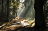 Autofahrer aufgepasst: Wildwechsel gefährdet Ihre Sicherheit