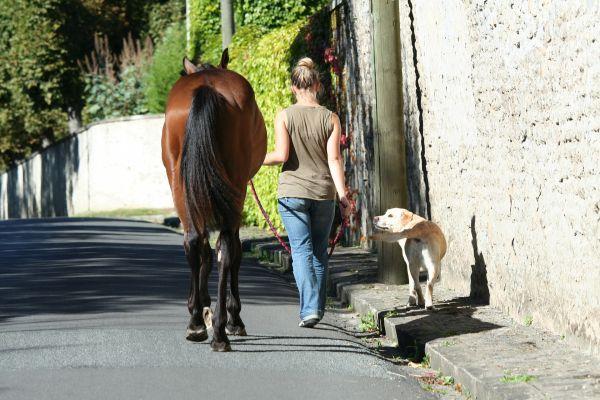 Hund und Pferd perfekt geschützt