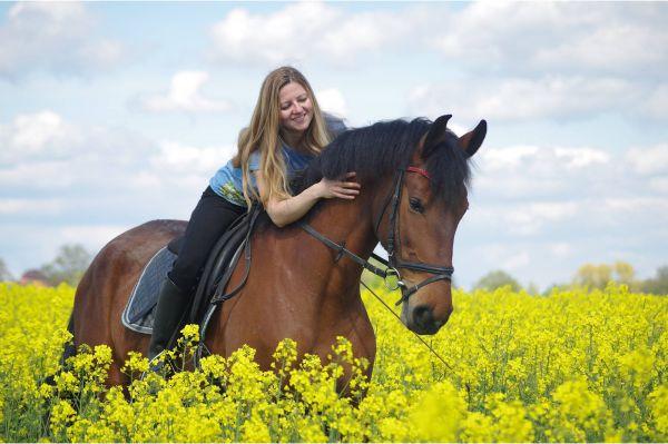 Rundum-Schutz für Ross und Reiter